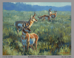 sagebrush pronghorn